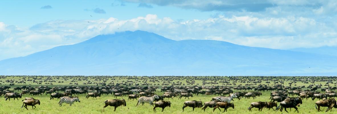 10-days-masai-mara-lake-naivasha.jpg