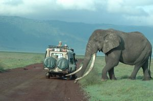 Tanzania Luxury Tour & Safaris
