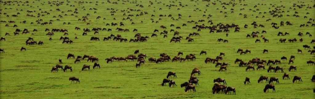 7 Day Safari Serengeti Tarangire Ngorongoro crater