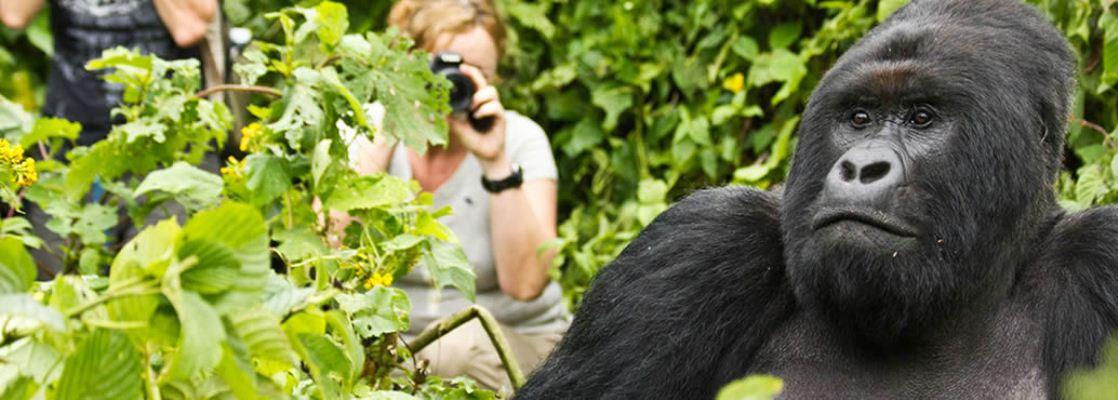 5Day-Gorilla-Trekking-Uganda.jpg