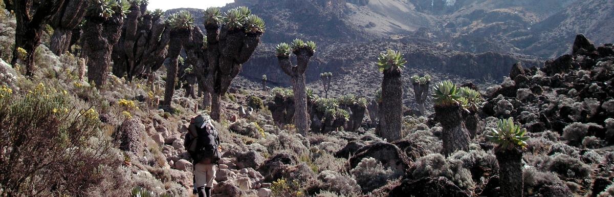 7-days-shira-route-on-kilimanjaro.jpg
