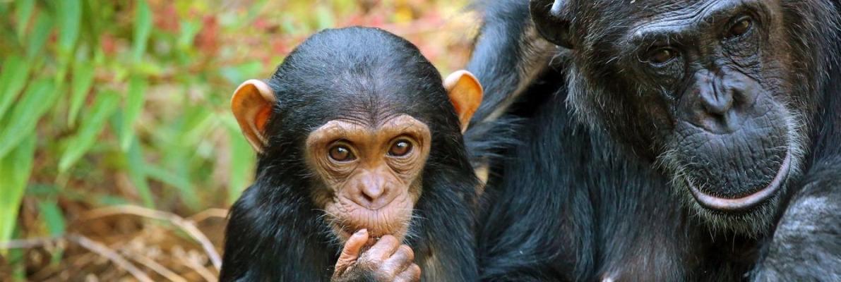 Rwanda-Gorilla-Trek.jpg