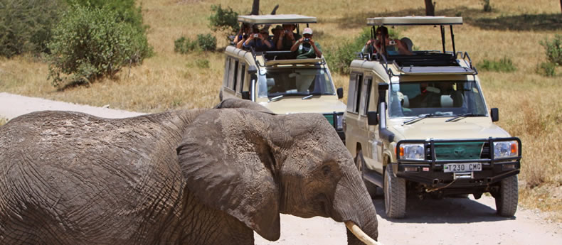 Tanzania Safari Packages Prices