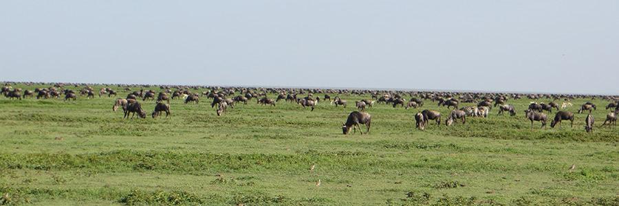 12 Days adventures Tanzania