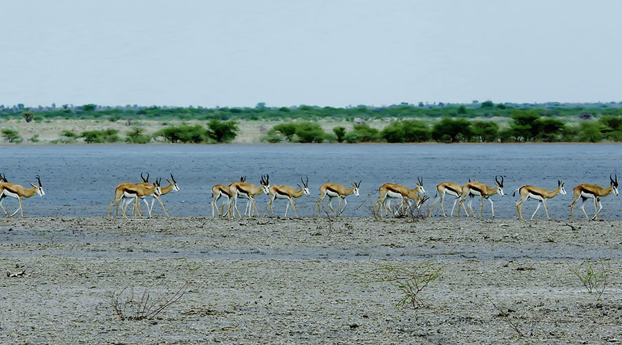 3 Day Chobe National Park tour Package