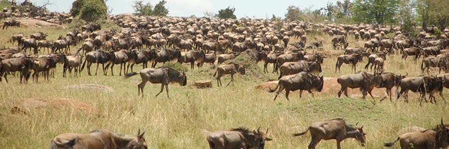 2 Days Safari Ngorongoro Lake Manyara