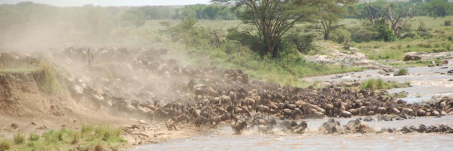 8 Days Tanzania wildlife Safari Tour