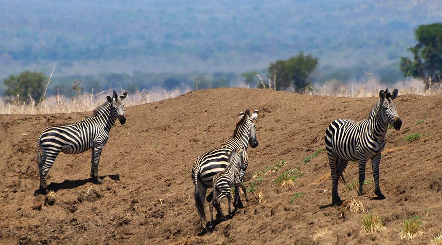 7 day Tanzania safari selous mikumi ruaha