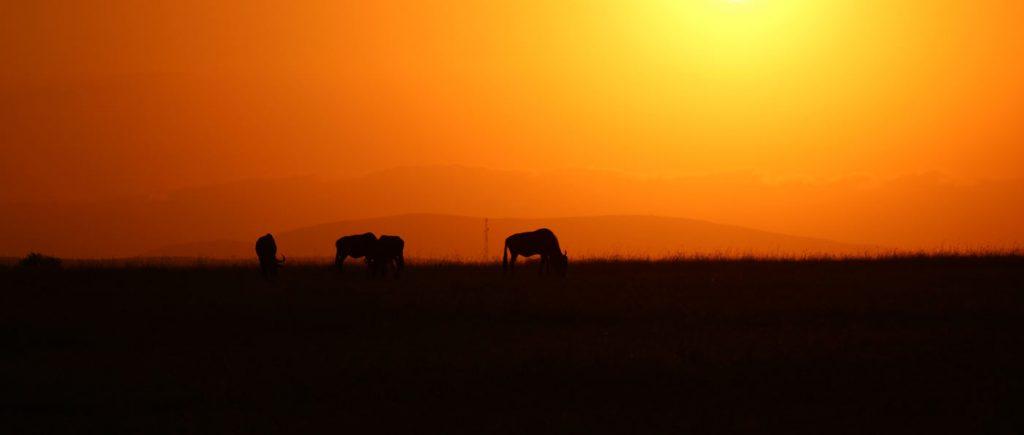 https://www.africajoytours.com/14-days-combined-kenya-tanzania-zanzibar-safari/