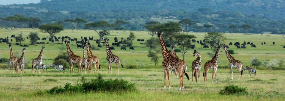 best-place-to-visit-in-tanzania.jpg