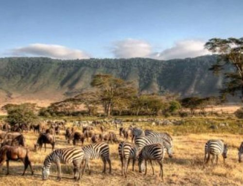 Fun things to know about Tanzania – Infographic
