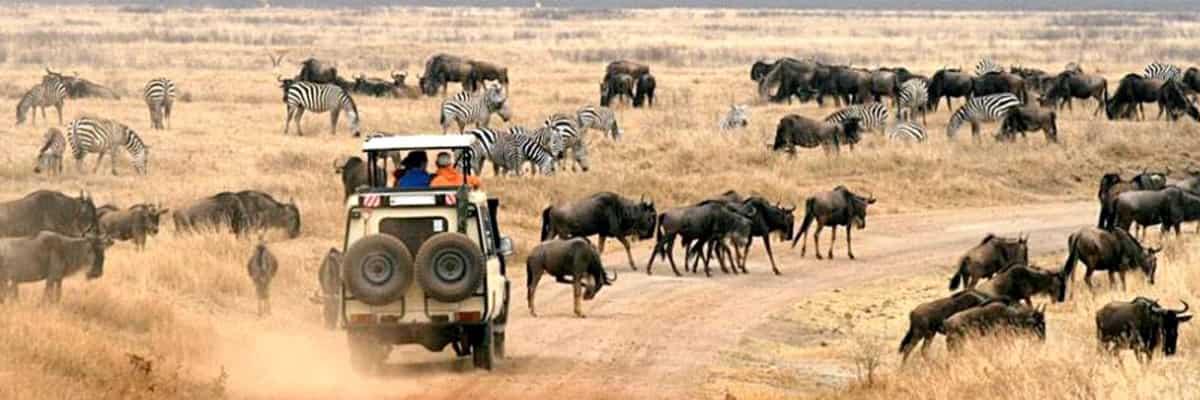 5-days-Amboseli-Nakuru-Masai-mara.jpg