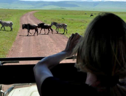 11 Days Kenya & Tanzania Wildlife Safari