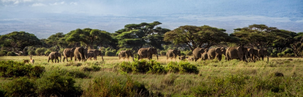masai-mara-lake-naivasha-tour.jpg