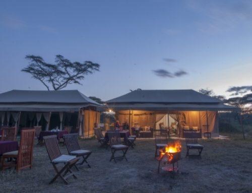Acacia Migration Camp