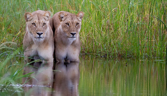 Image result for serengeti green