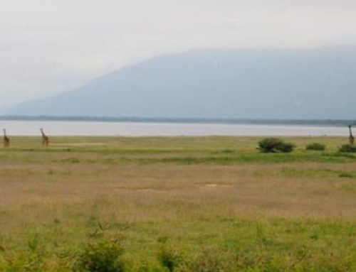 MANYARA WILDLIFE SAFARI CAMP.