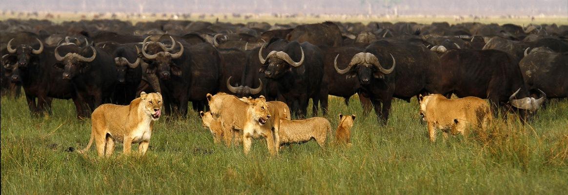 Mid-range-safari