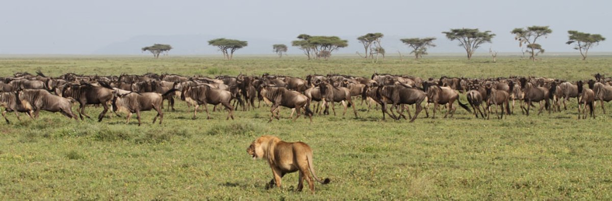 10-days-best-of-tanzania-kenya--safari.jpg