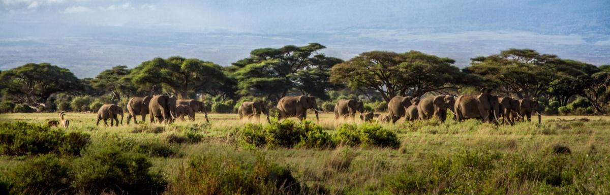 3-Days-Budget-safariTanzania.jpg