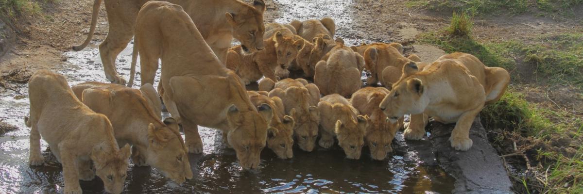 3-days-masai-mara-safari.jpg