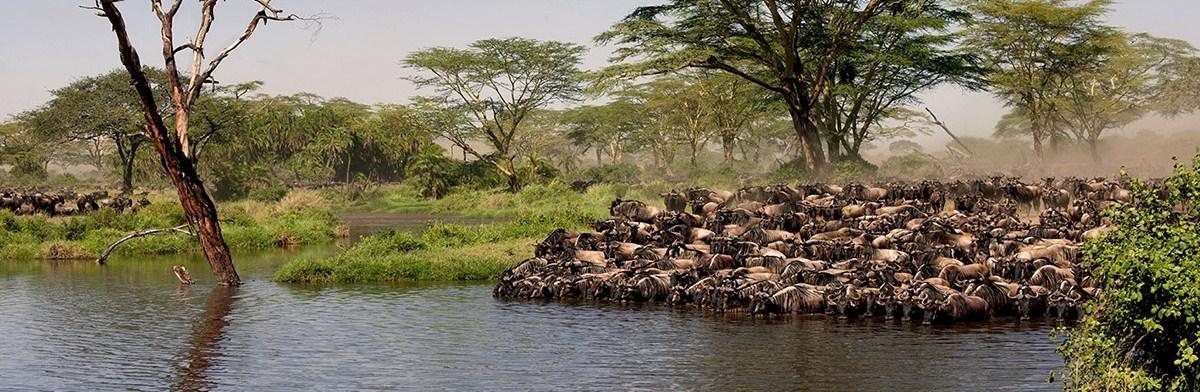 4-Days-serengeti-wildebeest migrations.jpg