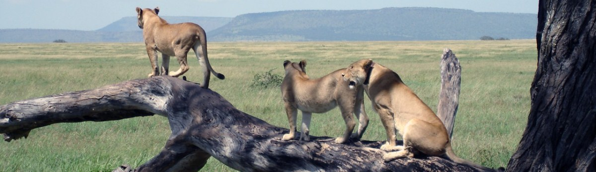 6-days-tanzania-wildlife-safari.jpg