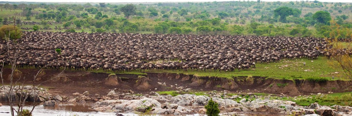 7-day-great-migration safari