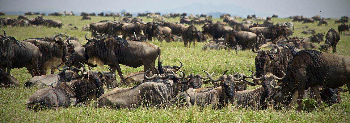 9-Days-Migration-Serengeti.jpg