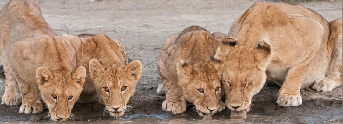 budget-safari-tanzania.jpg