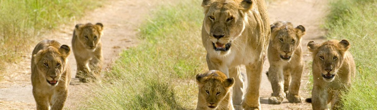 serengeti-migration-safari/classic-tour-tanzania/
