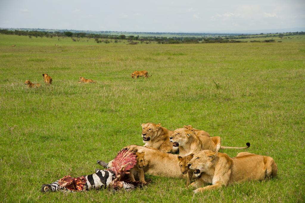 tanzania-wildlife-safari.jpg