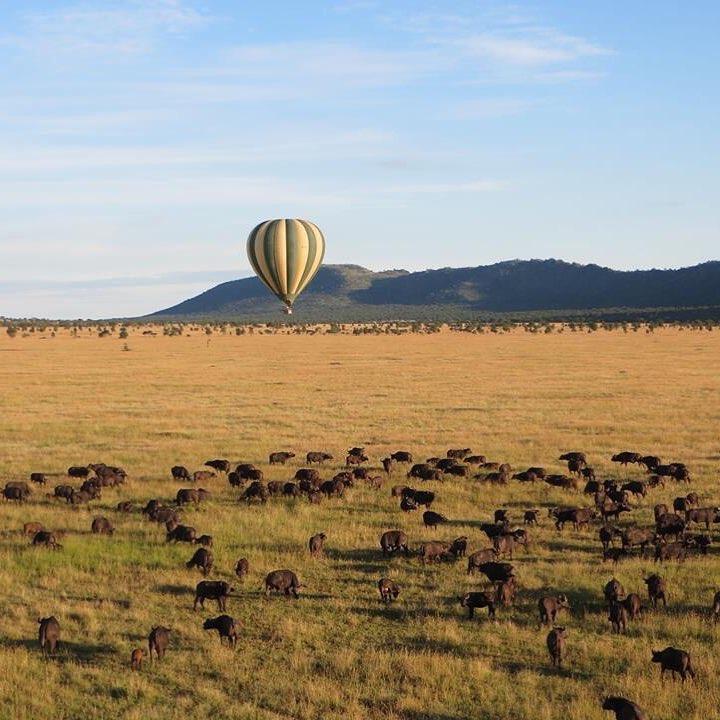 Serengeti wildebeest migration safari 4 days