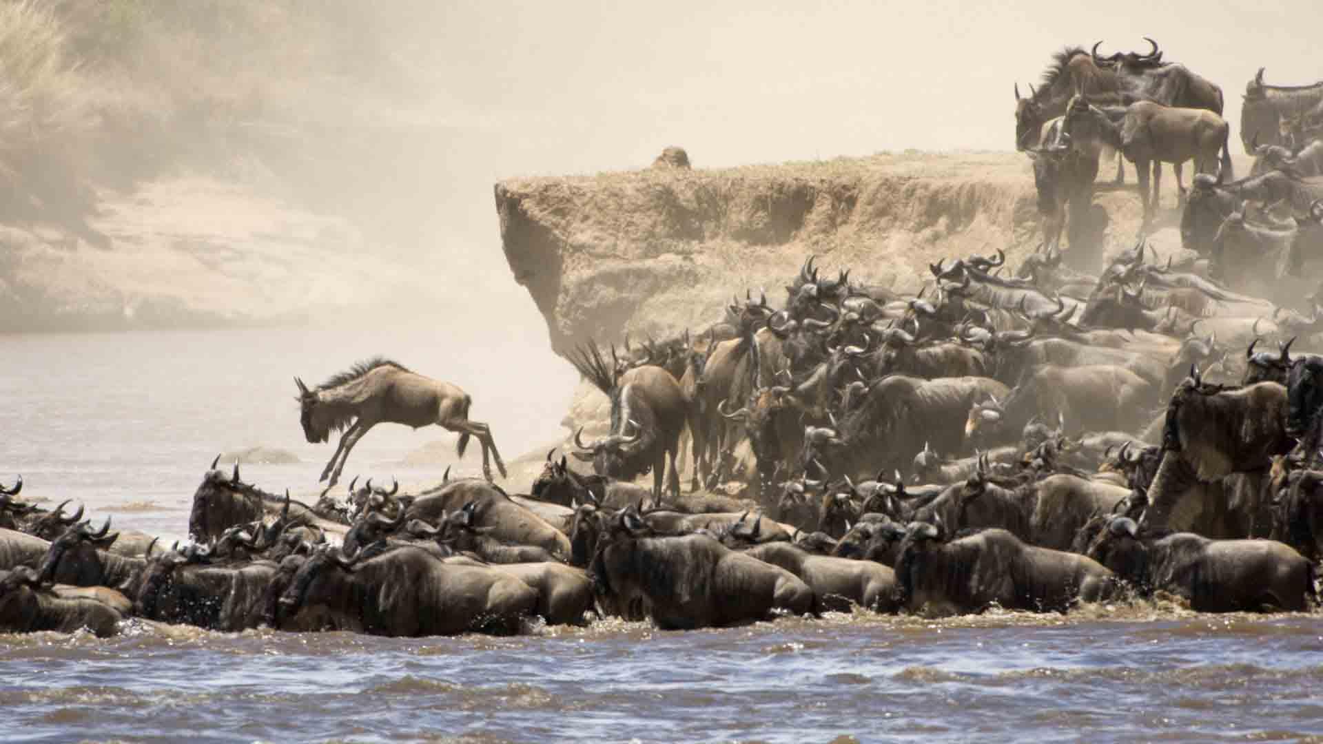 wildebeest-migration-safari-1.jpg